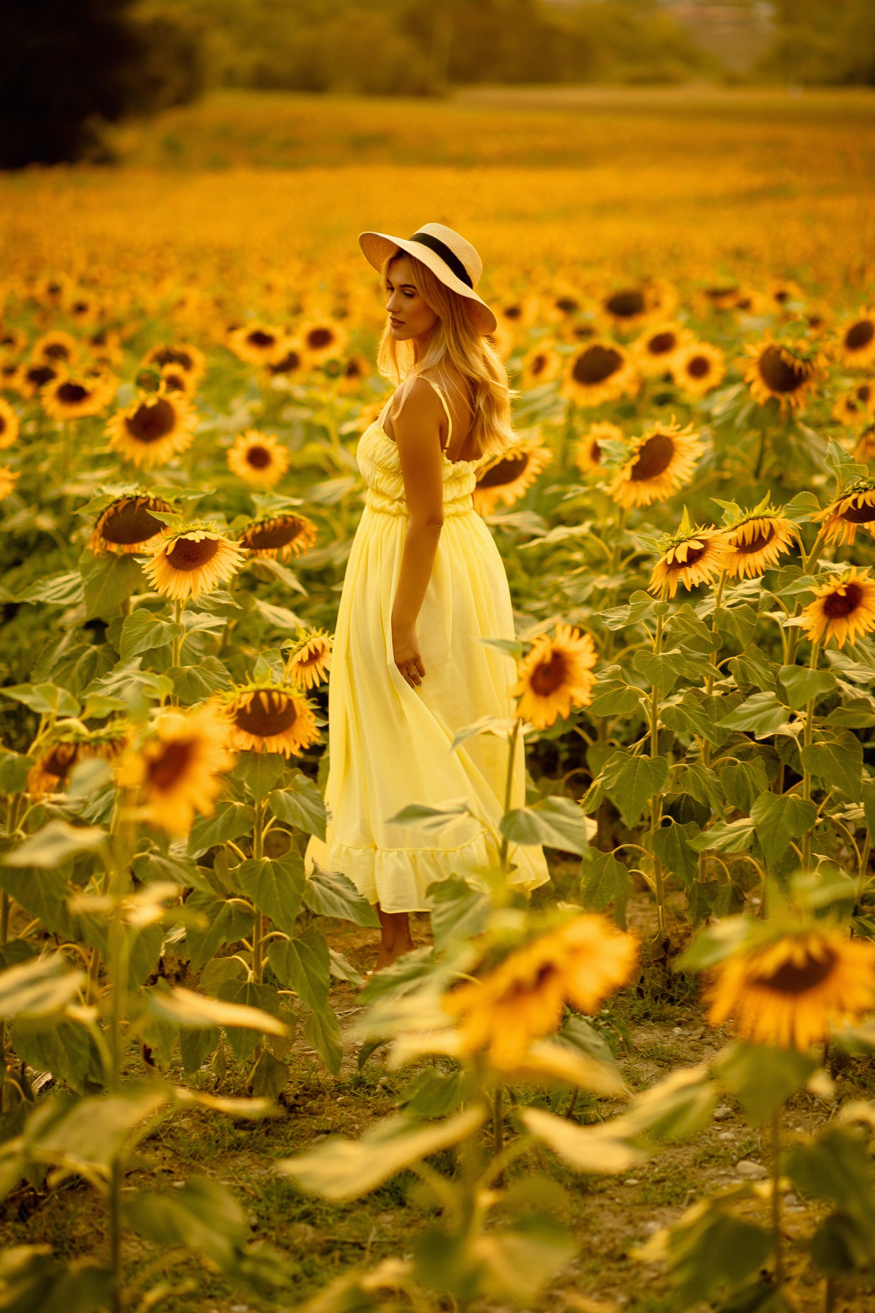 Beautiful girl looking at the sunflowers