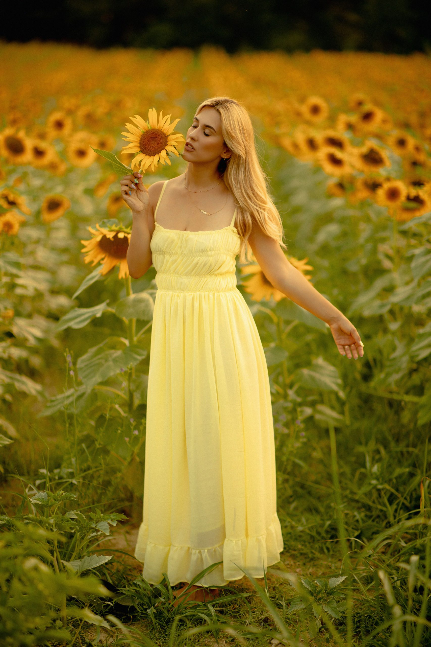 Golden hour photography in a sunflower field