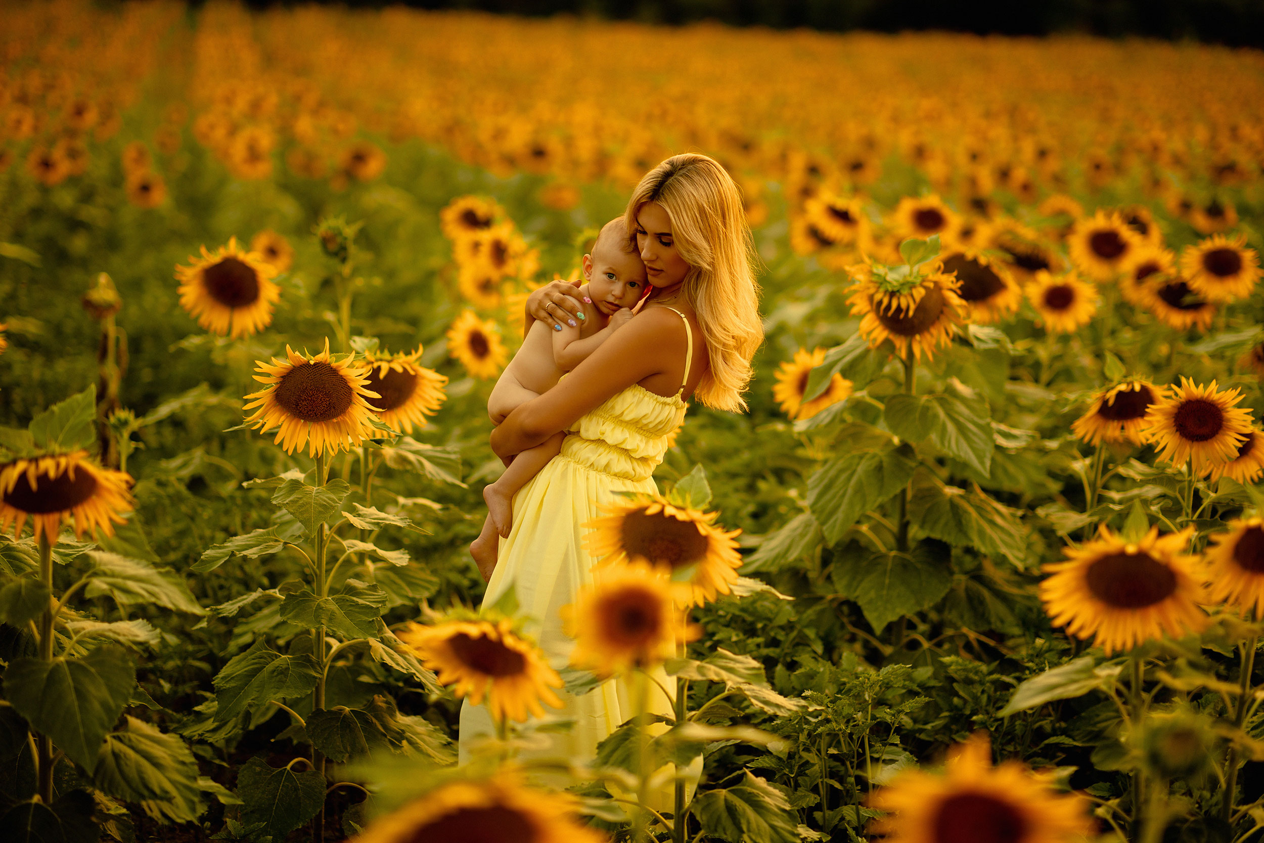 Mother and baby sunflower field photography