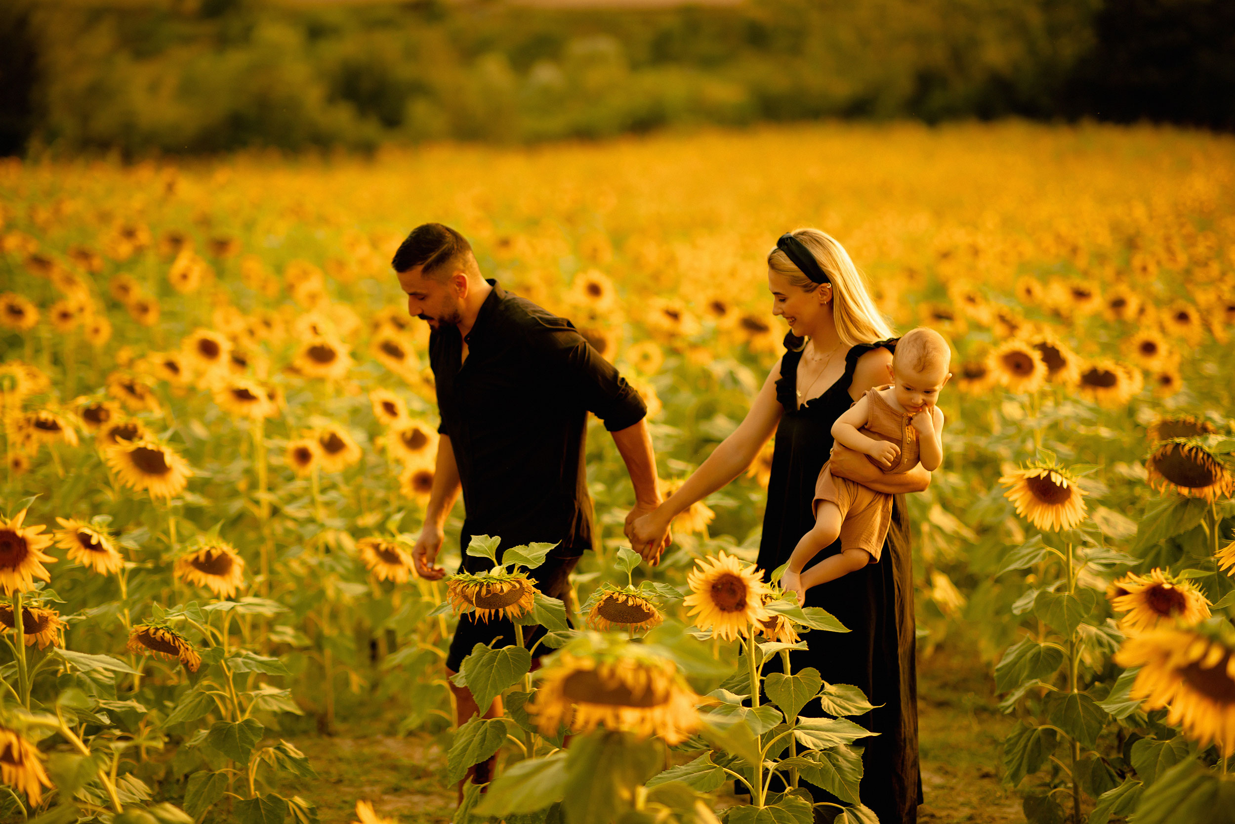 The beautiful couple holding hands and their baby in a sunflower field